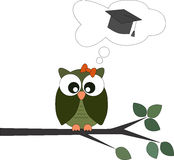 Owl on a branch with graduation cap in a speech bubble Stock Image