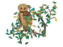 Owl on Branch with Leaves Royalty Free Stock Image