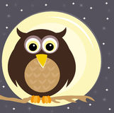 Owl on a branch at night Stock Photos