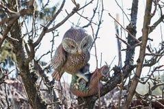 Owl On The Branch Of plástico un árbol Foto de archivo libre de regalías
