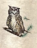 Owl on the branch Stock Photo