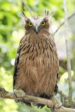 Owl on a branch saw whet owl owl in the woods stock photos