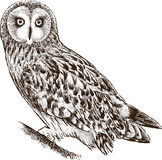 Owl on a branch. Vector drawing of a forest owl stock illustration