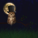 Owl on branch Stock Images