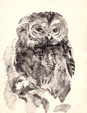 Owl brush drawing sketch Royalty Free Stock Photo