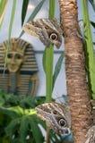 The owl butterflies (Caligo memnon) Royalty Free Stock Photography