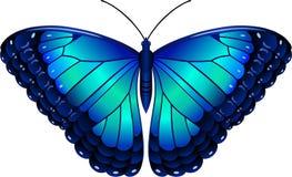Owl Butterfly Lat Caligo Eurilochus