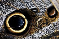 Owl Butterfly wing spots. Extreme closeup of owl butterfly wing spots Royalty Free Stock Images
