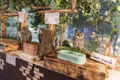 Owl café Akihabara Tokyo. Owl café, a theme café whose attraction is owls that can be watched and handled with. Visitors pay a cover fee, generally hourly Stock Photos
