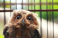 Owl in Cage Royalty Free Stock Photos