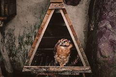 Owl. Cage, bird, birdphotography, animal, forest stock photo