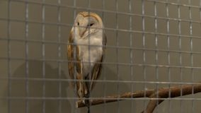 Owl in a cage view in the zoo