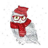 Owl in a cap and scarf were drawn by hand. Bird clothing. Glasses. Royalty Free Stock Photo