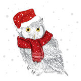 Owl in a cap and scarf were drawn by hand. Owl vector . Bird clothing. Stock Images