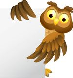 Owl cartoon with blank sign Stock Photos