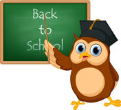 Owl cartoon with chalkboard Royalty Free Stock Images