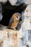 Owl in a cave Royalty Free Stock Photos