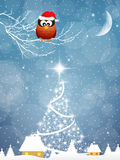 Owl at Christmas Stock Photo