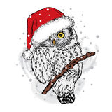 Owl in Christmas hat. Royalty Free Stock Photography