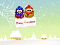Owl at Christmas Royalty Free Stock Photo