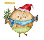 Owl christmas Stock Images