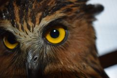 Eye of owl in the cage stock image