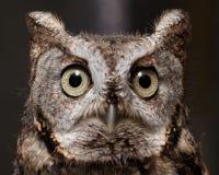 Owl closeup. A close up shot of an owl Stock Photo