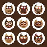 Owl collection. Vector illustration of birds collection including cute owls, funny bird cartoon characters Royalty Free Stock Images