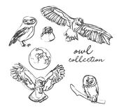 Owl collection. vector illustration. hand drawn sketch. Pencil drawing of hwildlife. forest birds. realistic sketch royalty free illustration