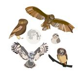 Owl collection. vector illustration. hand drawn sketch. Pencil drawing of wildlife. forest birds. realistic sketch vector illustration