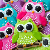 Owl cookies. Array of colorful owl cookies Stock Photos