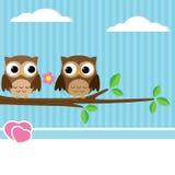 Owl couple Stock Photo