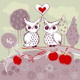 Owl couple on apple tree Stock Photos