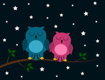 An owl couple night Stock Photography