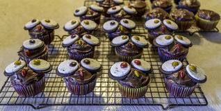 Owl Cupcakes Fotografie Stock