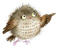 Owl. cute owl. school illustration. cartoon bird Royalty Free Stock Images