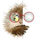 Owl. cute owl. school illustration. cartoon bird Royalty Free Stock Photos