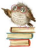 Owl. cute owl. watercolor forest bird. school books illustration. cartoon bird royalty free stock photography