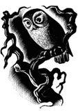 Owl in the dark Royalty Free Stock Photo