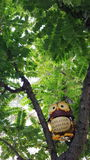 Owl perched on a tree branch. Stock Photos