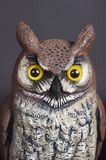 Owl Decoy made of plastic Stock Image