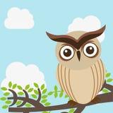 Owl design. Owl  grafic  design , vector illustration Stock Photos