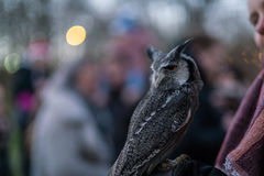 An Owl on display at the Christmas Fair by the Lake, Konstanz, G Royalty Free Stock Photography