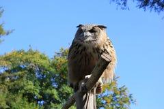 The owl Stock Photo