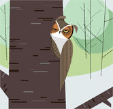 Owl dozes in the hollow of a tree trunk Stock Photography
