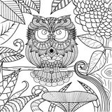 Owl drawing for coloring book. Stock Photo