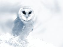 Owl in a dream Royalty Free Stock Images