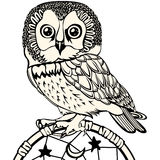 Owl with Dream Catcher Stock Photography
