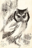Owl dry brush drawing Stock Photography