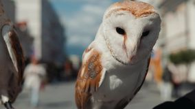 Owl eagle very close up, detail face, macro portrait white bird on street stock video footage